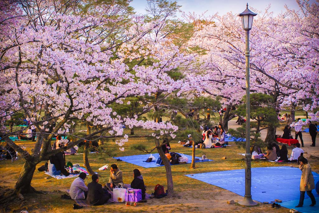 Cherry-Blossom-in-Japan-and-Korea-1
