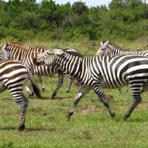 Kenya safari : l'arche de Noé