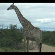 South Africa : Parc Kruger