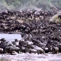 Tanzanie : Merveille de la nature